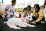 les paradoxes des animaux en Chine