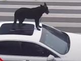 Chine -  Il conduit avec son chien sur le toit