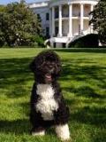 Un projet d'enlèvement du chien de Barack Obama déjoué par le Secret Service