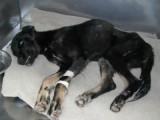 Un chien sauvé d'un canyon
