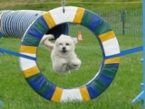 Canada - De beaux chiens fous... qui courent partout
