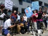 Québec - Manifestations contre les usines à chiots