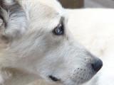 Belgique - L'homme qui a torturé son chien à mort en a un nouveau