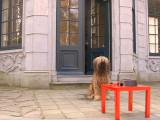 A Bruxelles, les chiens ont leur bar et leur bière, sans alcool