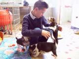 Un jeune garçon sauve des chiots beagle et en adopte un