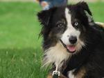 Suisse - Les propriétaires de chiens sèchent les cours