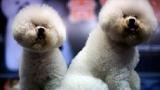 Belgique - Stoumont : 3.250 chiens pour 2.998 habitants
