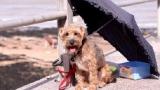 Belgique - Plus de 400 chiens maltraités ont été saisis en 2011