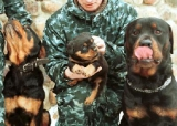 Ce qu'il faut savoir sur les chiens dangereux