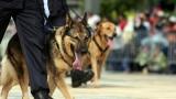 TVA : les éleveurs de chiens et chats descendent dans la rue