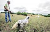 une pétition contre les vols de chiens de chasse