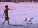 Avec la HD, votre chien va devenir accro à la télé