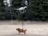 Promener son chien avec un drone