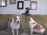 Deux Beagle et un dragon