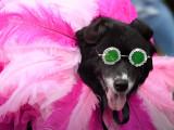 A New-York, les chiens aussi se déguisent pour Halloween