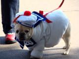 En Californie, les chiens fêtent Halloween à leur façon