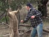 Un homme boxe un kangourou pour sauver son chien et... ça fait polémique