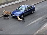Les chiens n'aiment pas cette voiture