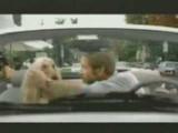 Un chien lévrier acteur principal d'une publicité drôle
