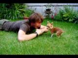 Un chien Chihuahua joue avec son maître