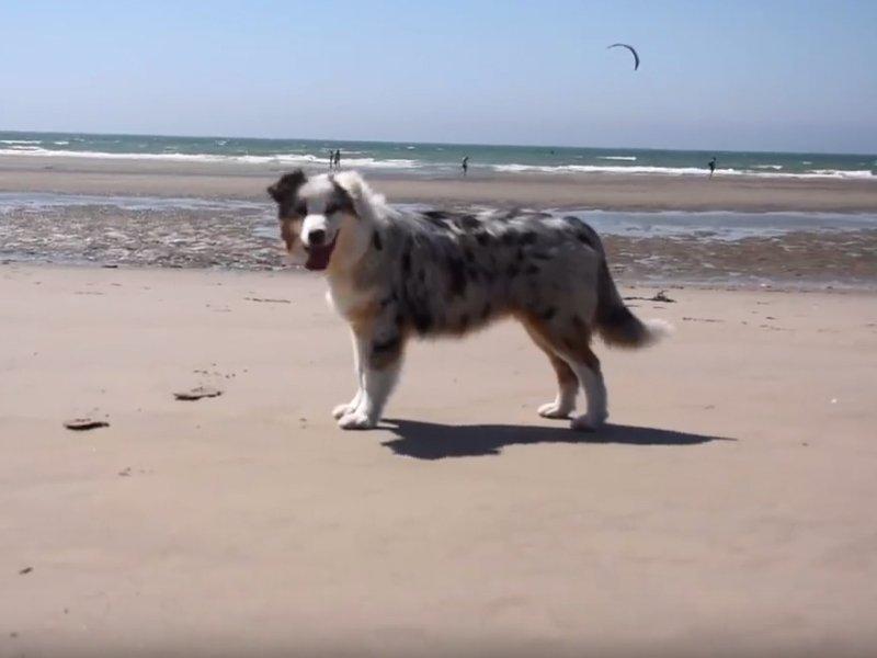Vidéo C'est l'heure des vacances à la plage pour Maje un
