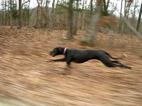 How Fast Can A Dog Run Mph