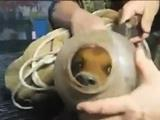 chiot  la tête coincée dans un bidon