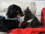 Le chien suit le chat et tombe