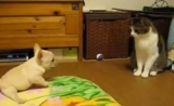 Un chiot essaie d'attirer un chat dans son jeu