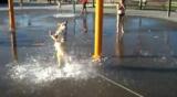 un chien s'amuse avec des jets d'eau