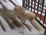 Ce bébé husky découvre la neige