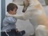 Compilation de chiens qui aiment leurs maîtres... et qui leur montrent!