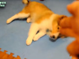 Compilation de chiens jouant au