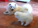 Une mère et son chiot partagent un moment complice