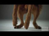 Beaux chiens dans une publicité en vidéo