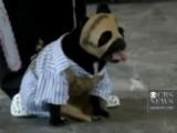 les chiens fêtent Halloween