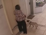 Un chien piégé par un ascenseur échappe de justesse à la mort .