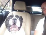 Bulldog chante du Rihanna