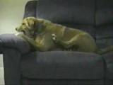 Une vidéo surprenante d'un chien qui attaque sa propre patte