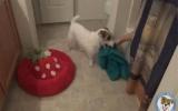 Un chien domestique