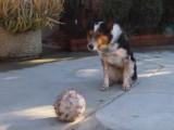 Jumpy, chien le plus intelligent du monde - ou le mieux dressé ?