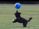 Alfie, nouvelle star du ballon rond outre-Manche