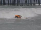 Tillman, un bulldog Anglais, fait du surf