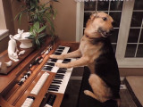 Des chiens talentueux qui nous épatent!