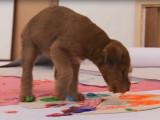 Deux Irish Terrier font de la peinture
