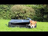 Ce chien Jack Russell est étonnant et drôle