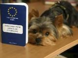 Le passeport européen pour chien