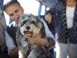 Prendre le bus ou voyager en car avec son chien