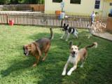 Mettre son chien en pension : les pensions canines