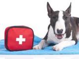 La trousse de secours du chien